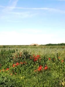 paisatge Pla d'Urgell